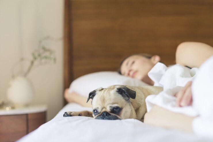 Indretning og søvn