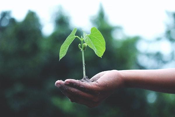 bæredygtig-verden