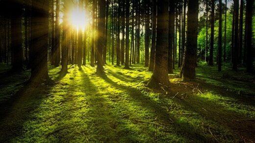Træer, skov, grønt