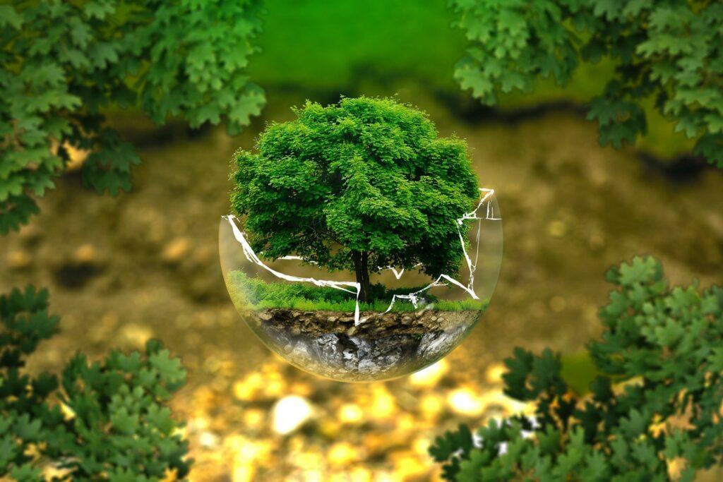 Voksende træ